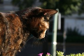 brown Cat looking at flowers outdoor