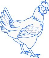 schematic illustration of a rooster