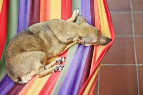 the dog lies on a colored hammock