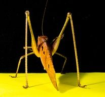 yellow grasshopper on a yellow surface
