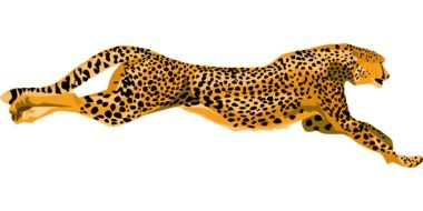Cheetah Wildcat running Fast vector art
