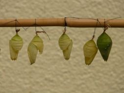 green butterfly dolls on a wooden stick