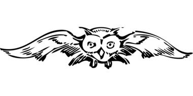 drawing of a flying owl