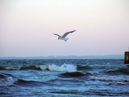seagull flying over the waves of the Baltic Sea