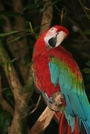 colorful big Parrot