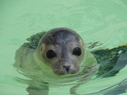 baby seal in the North Sea