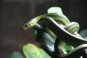 venomous snake on a green plant