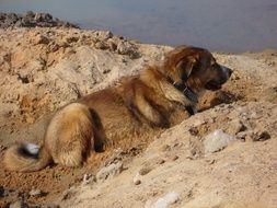 the dog is lying on the sand