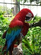 Sweet colorful macaw parrot