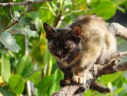 kitten on a tree in the mangroves in india