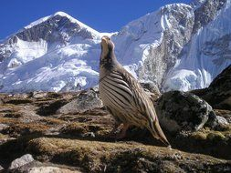 bird on the rocks in nepal