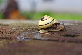 yellow snail close up in garden