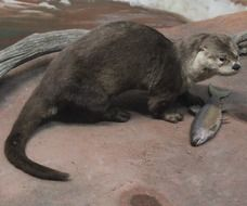 beautiful and cute Otter with Fish