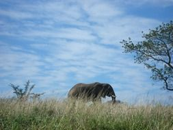 Landscape of Wild Elephant in South Africa