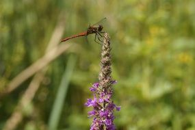 red dragonfly on a bright flower
