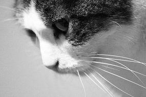 Cat Black And White foto