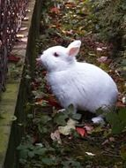 small white Rabbit on ground at fence