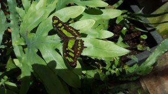 butterfly with green spots on a plant