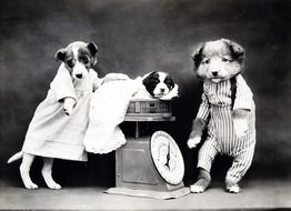 puppies in clothes at a black and white photo shoot