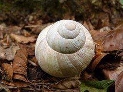 white snail shell on the leaves