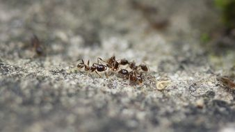 ant Insects Close-Up