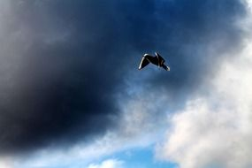 bird flight under dark clouds