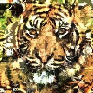 abstract portrait of a tiger