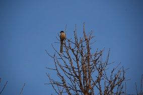lonely bird on a tall tree against a blue sky
