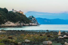 Dog sitting on coast in view of Duino Castle at Gulf of Trieste, italy