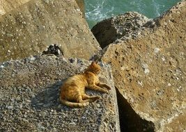 red Cat Animal lying on stones