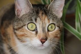 domestic cat with amazing eyes