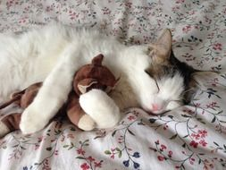 cat is sleeping with a soft toy