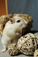rodent stands on decorative balls