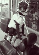 Black White Picture of Dog on Motorcycle