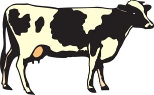 Cute black and white cow clipart