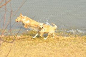 dogs jumping in a spray of water