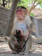 monkey with baby on earth
