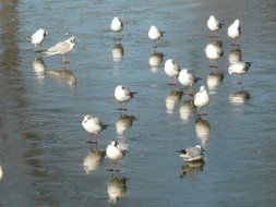 flock of gulls on the lake