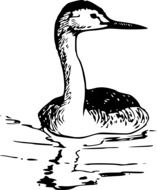 black and white drawing of a bird on the water