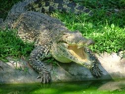 Picture of Crocodile in a zoo