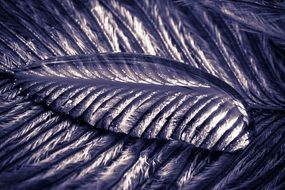 transparent water drop on the feather
