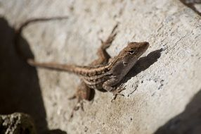 lizard on a stone on a sunny day