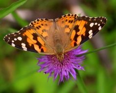 Colorful butterfly on the beautiful violet flower