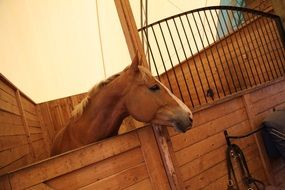 brown horse in a beautiful stable