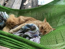 Cat is sleeping in the hammock