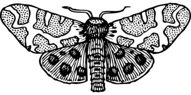 Black and white moth clipart