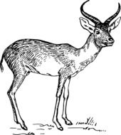 Black and white antelope clipart
