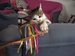 kitten with colorful ribbons