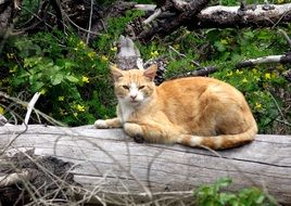 red cute cat resting on a log
