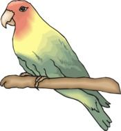 drawing of a perched parrot